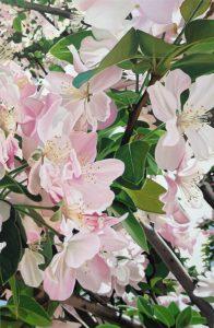 23 Qingdao Cherry Blossom Part 2