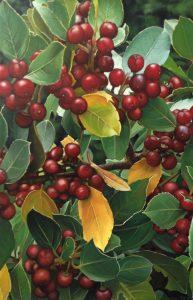 3 Red Berries