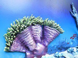 Alive Coral Close Up Petra Meikle De Vlas