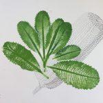 Banksia and Bottlebrush