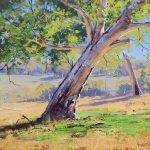 Whittlesea Gum Tree Victoria