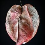 Autumn Leaf ll Photography Print