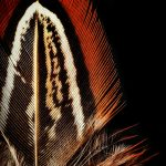 Bohemian Feather Photography Print
