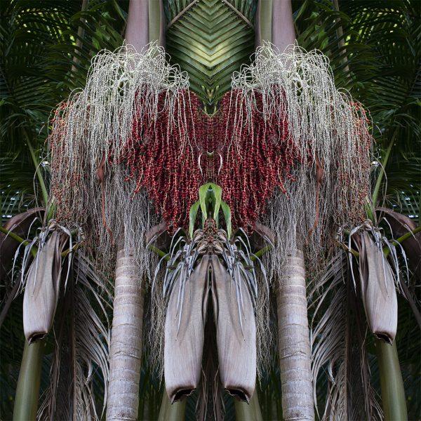 Palm Praise