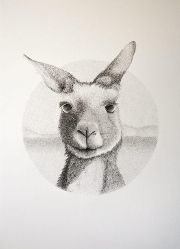 2018 Kangaroo1 06