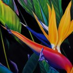 Splendid Bird of paradise