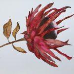 Earthy Protea