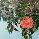 Gum Blossom and Lorikeets