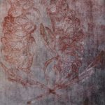 Banksia – Rose Ltd Ed Print