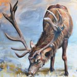 In the open – Red Deer