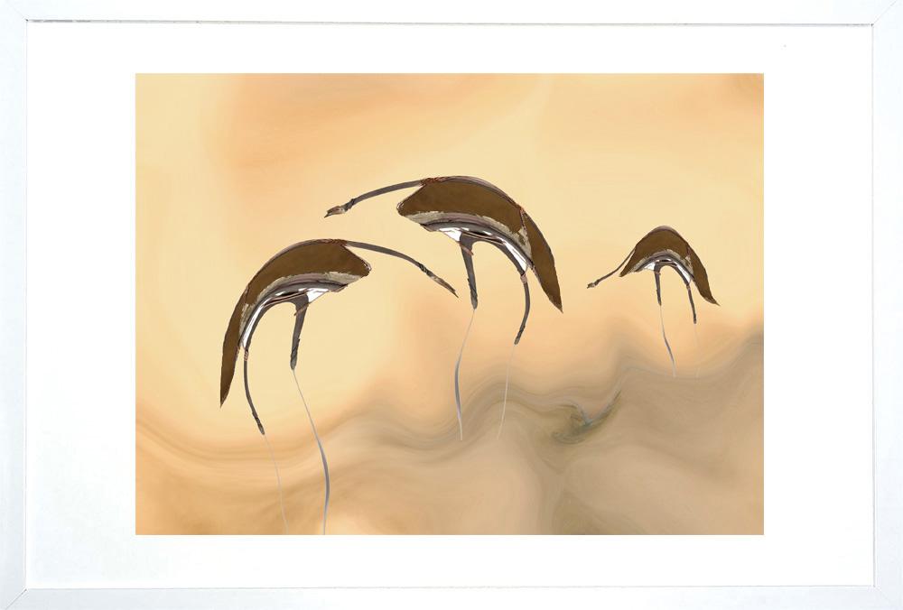 Emu Framed