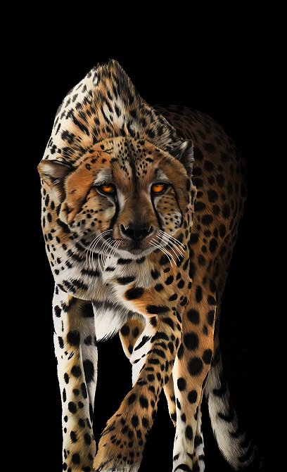 Leopard Resized
