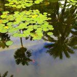 Reflections, Majorelle Garden, Marrakesh – Ltd Ed Print