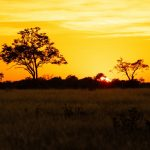 Sunrise   Khwai Okavango Delta