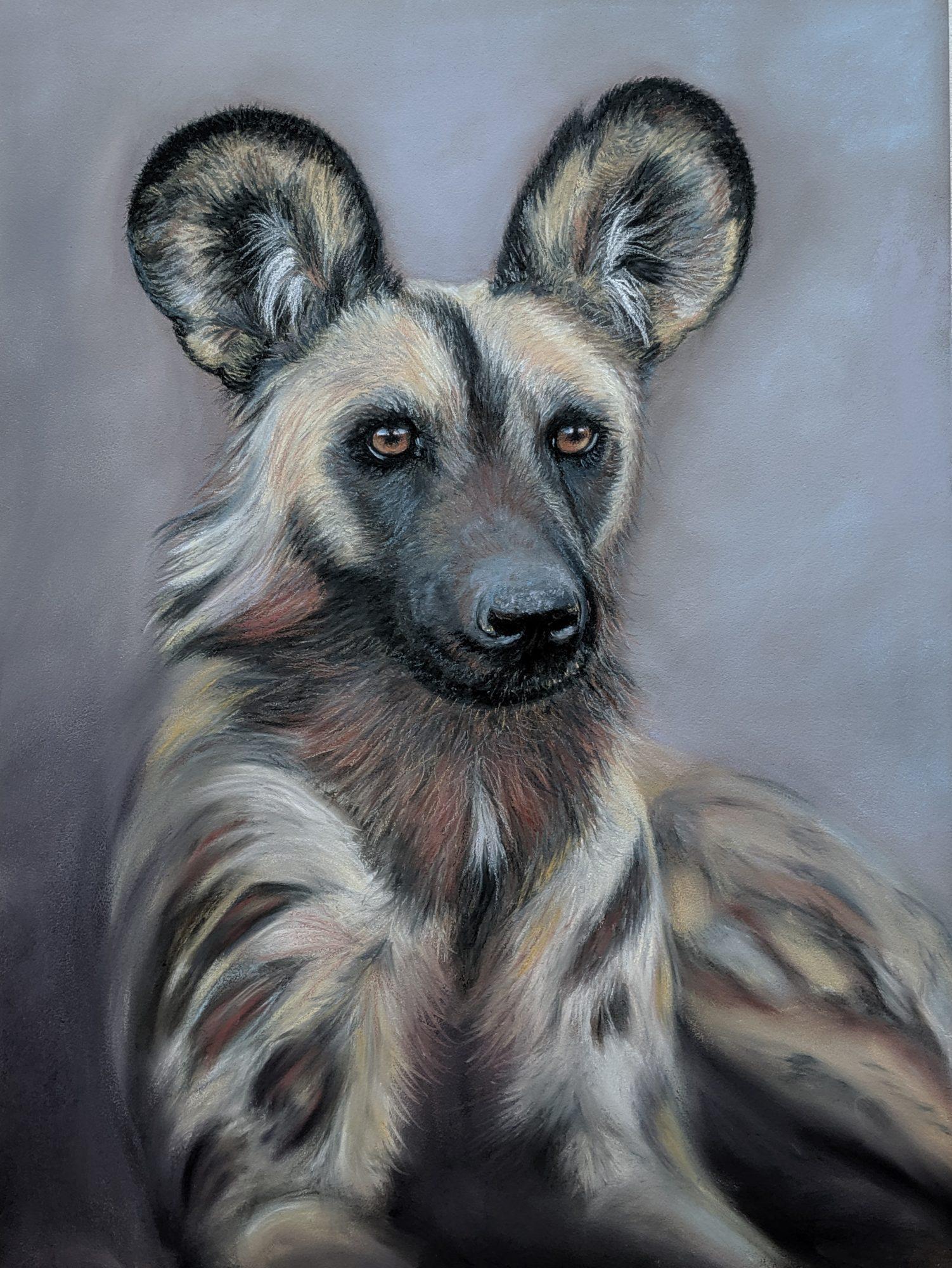 African Wild Dog Deb Farrimond