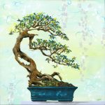 Bonsai Love – Ltd Ed Print