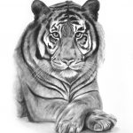 Majestic Tiger Ltd Ed Print