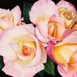 Morning Roses – Ltd Ed Print on Canvas