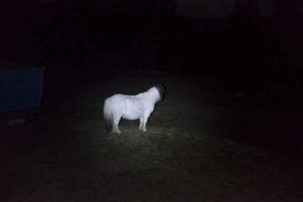 Toby The Haunted Pony2 Aldona Kmiec