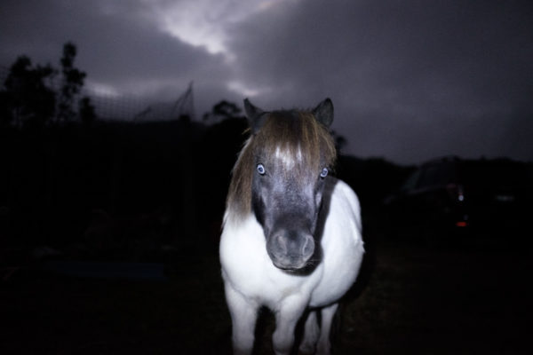 Toby The Haunted Pony Aldona Kmiec