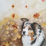 Australian Shepherd Dog In Autumn – Ltd Ed Print