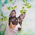 Basenji dog head study