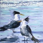 Crested terns at Harry Hills Beach
