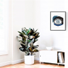 Ocean Eyes Small Rubber Plant
