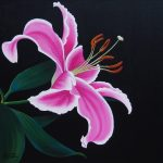 Pink Tiger Lily