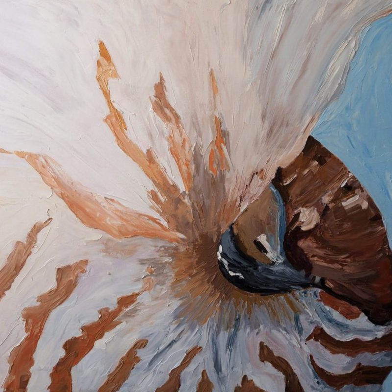 Nautilus Exposed Carmen Griffen Art Lovers 1024x816