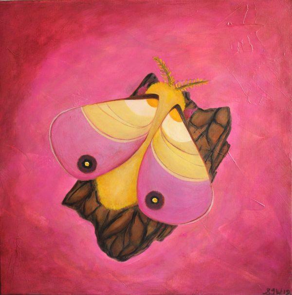 Sweet Little Moth Of Rosy Delight