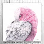 La Vie en Rose – Galah – Ltd Ed Canvas Print