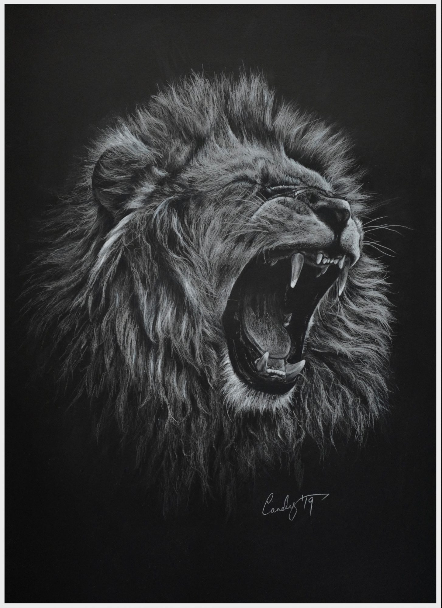 Lionroarborder
