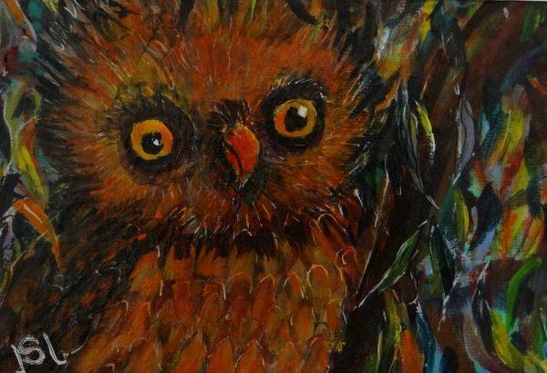 Owl ! Copy