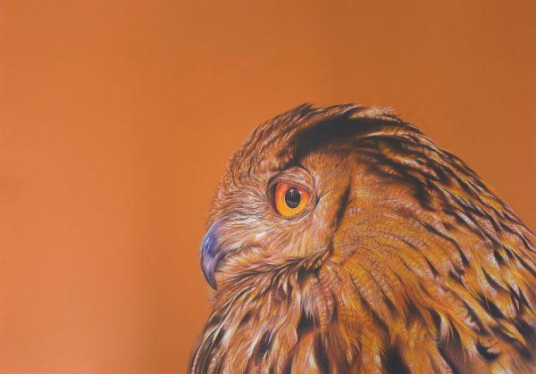Owlprinta4