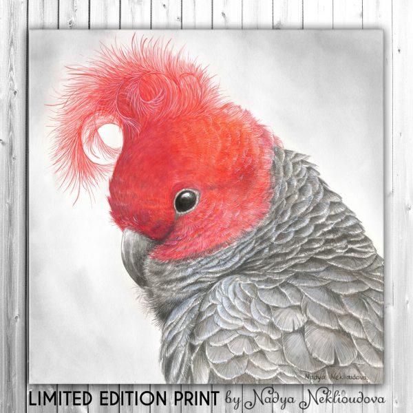 Redhead Canvas Le Bt0