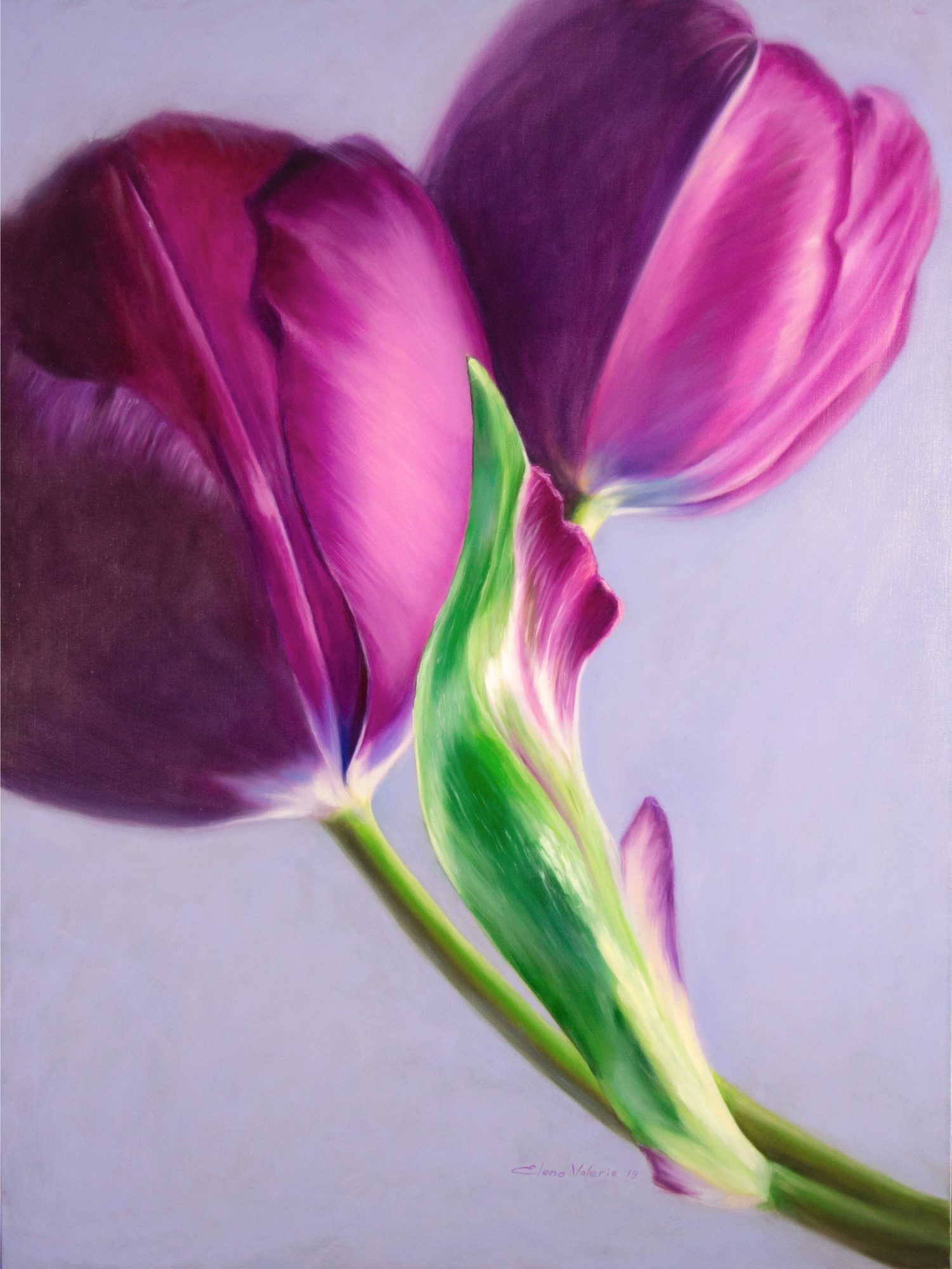 Story Of The Tulip Elena Valerie 2019