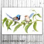 Variegated Fairy-wrens – Ltd Ed Canvas Print