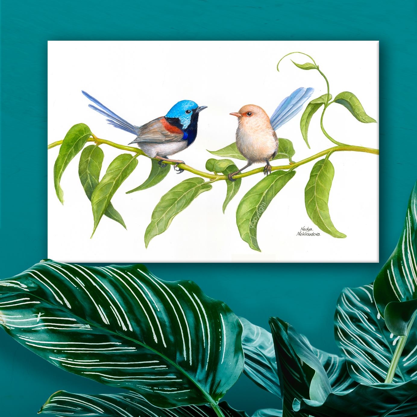 Variegatedfairywrens Canvas Room4