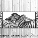 Zebra Love  Ltd Ed Canvas Print
