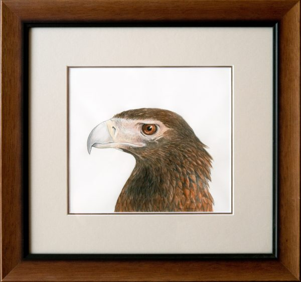 Eagle Framed Sm