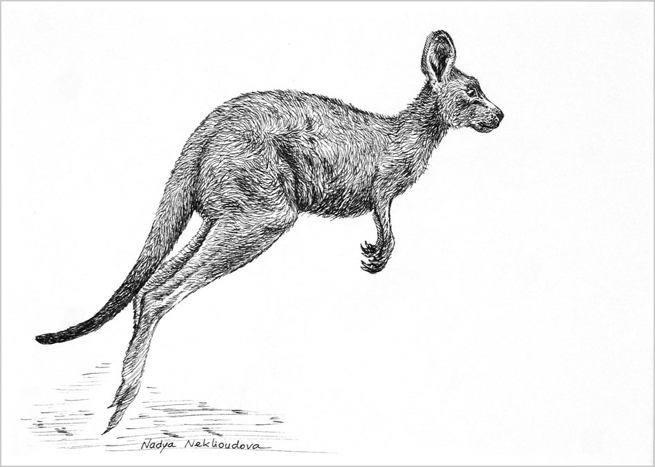 Jumpingroo Unmatted Small