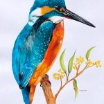 Sacred Kingfisher With Golden Wattle