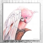 Pretty in Pink – Major Mitchell's Cockatoo – Ltd Ed Canvas Print