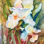 Spiritual White Iris