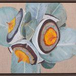 Mottlecah gumnuts