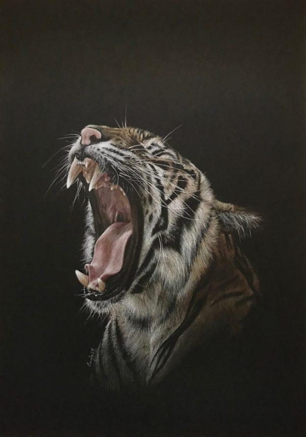 Tigerroar