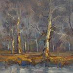 Misty Gums  Gum Trees NSW