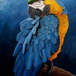 Blue and gold macaw portrait Ltd Ed Giclee Print