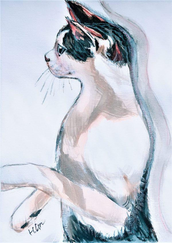 Front Cat